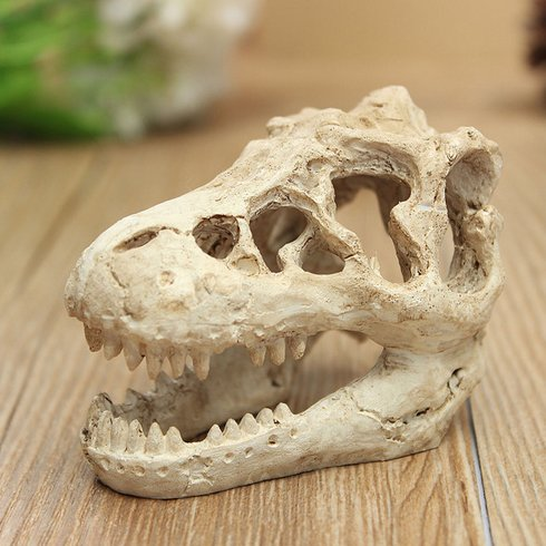 dragon skull modelling
